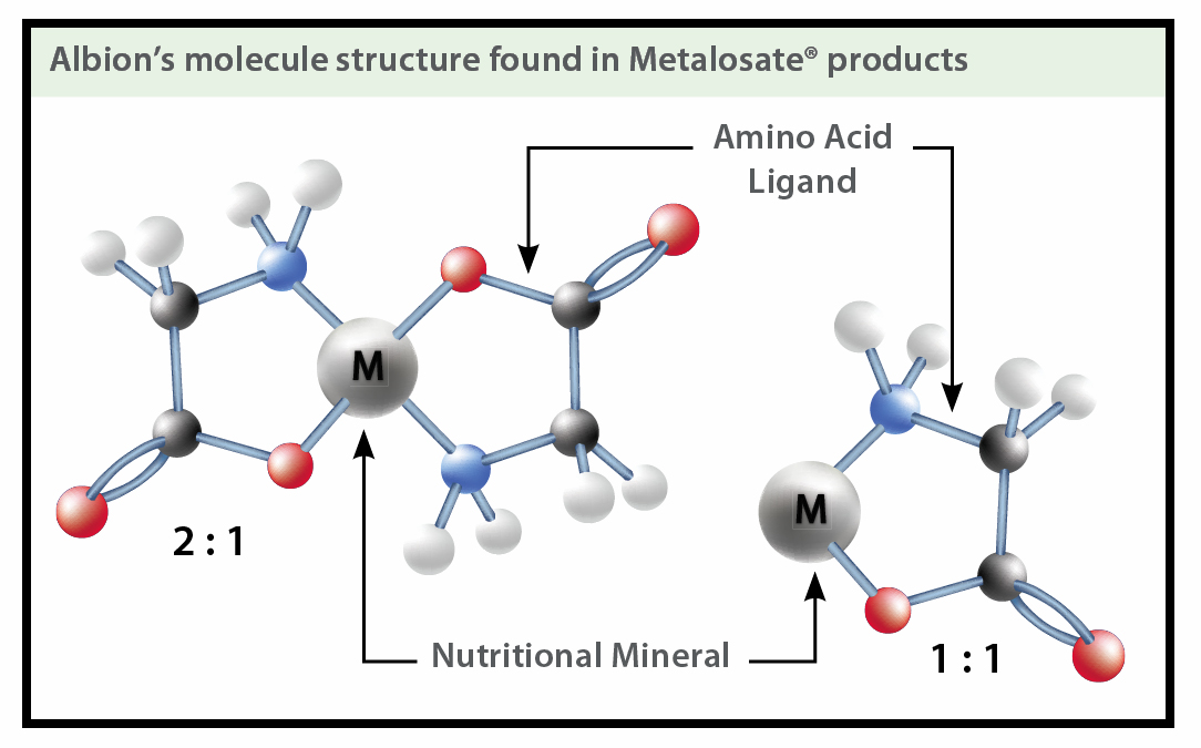 Albion's molecule structure found in Metalosate products